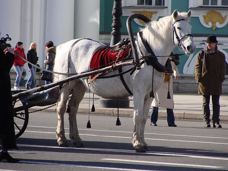 Лошадь на Дворцовой площади.