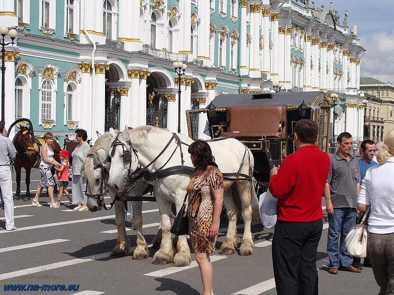 Эти лошадки катают туристов на Дворцовой площади.